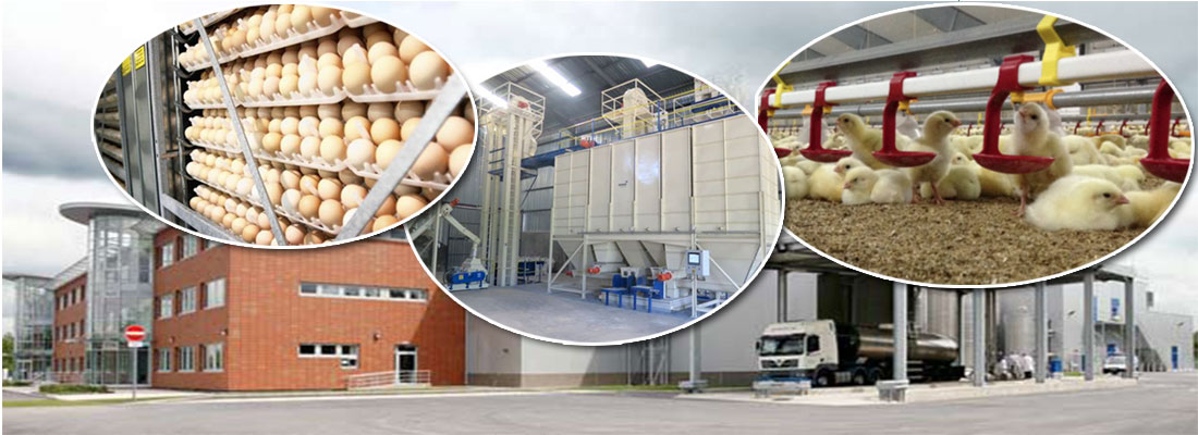 poultry production experts